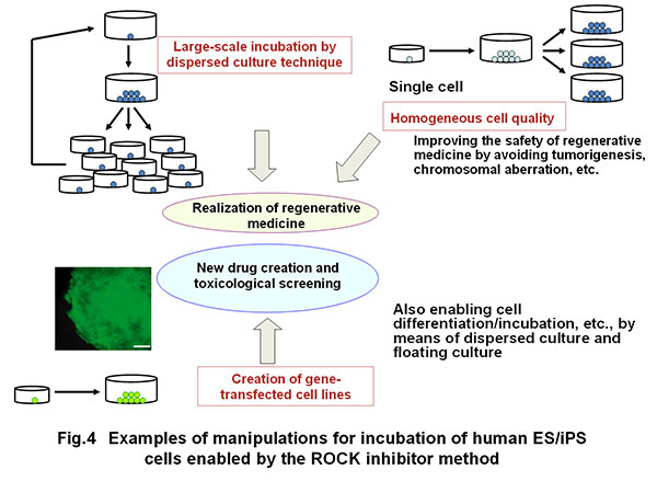 a study on the possibility of human cloning When scientists wish to replicate a specific gene to facilitate more thorough study, molecular cloning is implemented in order  human cloning and human dignity.